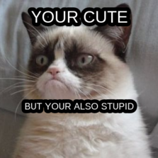 your cute but your also stupid