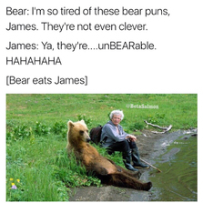 I'm so tired of these bear puns