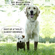 Short dogs vs Big dogs playing in...