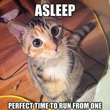 Cat Logic At Its Best