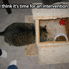 I think it's time for an interven...