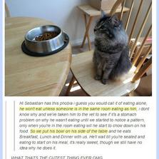 A Very Polite Cat