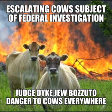 escalating Cows subject of federal investigation judge dyke jew bozzuto danger to cows everywhere