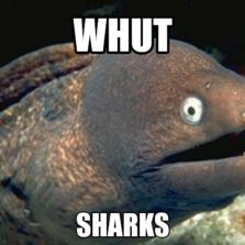 whut sharks