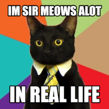 im sir meows alot in real life