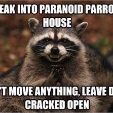 Break into Paranoid Parrot's house