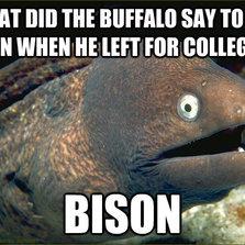Buffalo say to his son