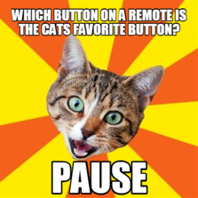 Which button on a remote is the cats favorite button? pause