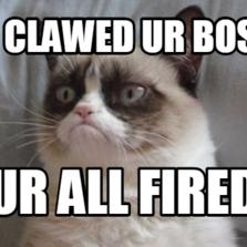 589863 grumpy cat hilarious cat pictures with captions,Cat Boss Meme