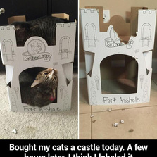 Bought my cats a castle today