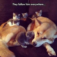They follow him everywhere