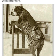 Most decorated war dog of WWI