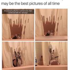 Destroying the shower