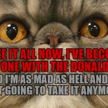Aristocat Hilarious Cat Pictures With Captions