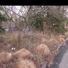 Where Donald Trump grows his hair