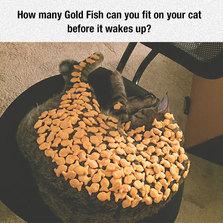Cat nap challenge