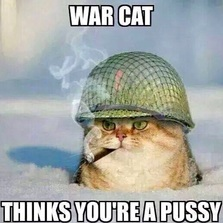 War cat thinks you're...