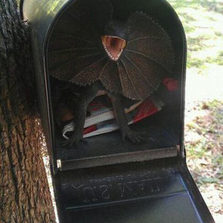 How to scare your mailman