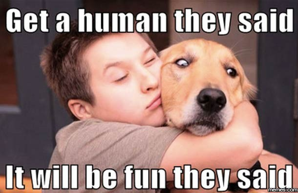 Image result for get a human they said meme